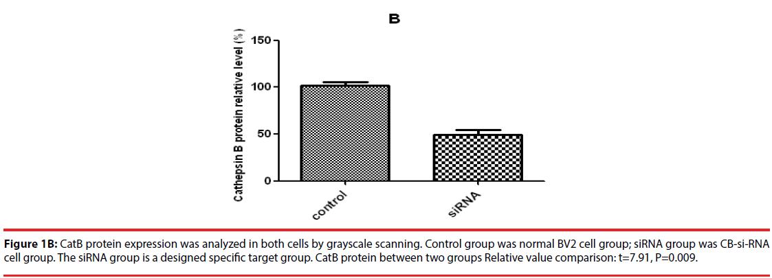 neuropsychiatry-CatB-protein