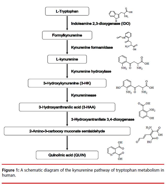 neuropsychiatry-kynurenine-pathway