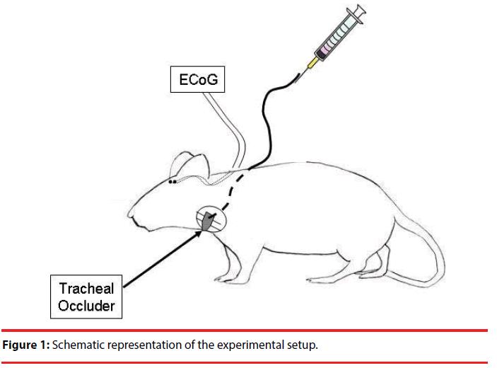 neuropsychiatry-schematic-representation
